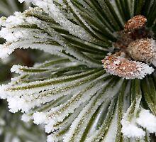 Pine Pogo Detail by Jon  Johnson