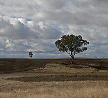 Tilled Earth-Lone Tree by GW-FotoWerx