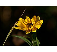 Sunny Honey Photographic Print