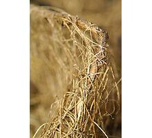 Nature's Weave Photographic Print