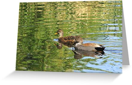 Gadwall ~ Pair by Kimberly Chadwick