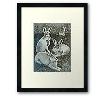 Four Bunnies Framed Print