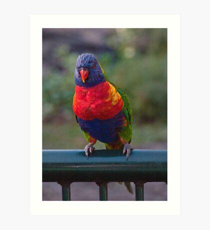 Rainbow Lorikeet digital art Art Print