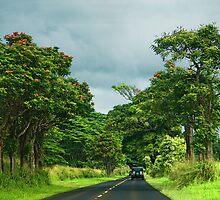 Beautiful Hawaii by susan stone