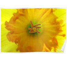 Daffodil Central Intelligence Poster