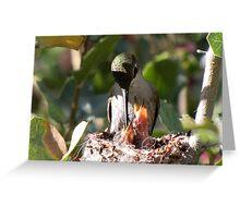 Costa's Humminbird & Babies 3-11-10 Greeting Card