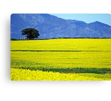 Fields - South Africa Canvas Print