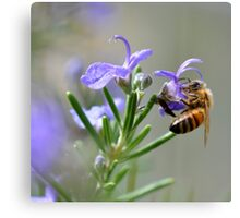Bee in the Lavender Canvas Print