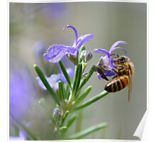Bee in the Lavender Poster
