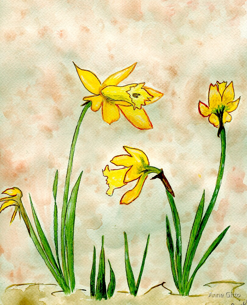 Daffodils of Spring by Anne Gitto