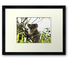 Old Man in the Tree Framed Print