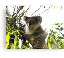 Old Man in the Tree Canvas Print