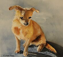 Chinese Puppy Dog by Susan Moss