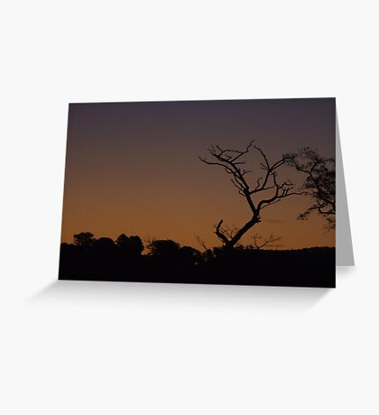 Bare - Mansfield, Victoria Greeting Card