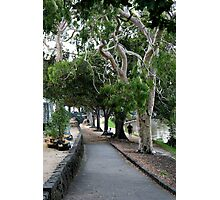 Riverside path Photographic Print