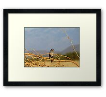 White-crowned Sparrow ~ Adult Framed Print