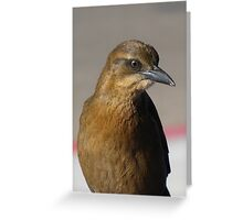 Great-tailed Grackle ~ Juvenille  Greeting Card