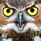 """Bright Eyes"" - Great Horned Owl by John Hartung"