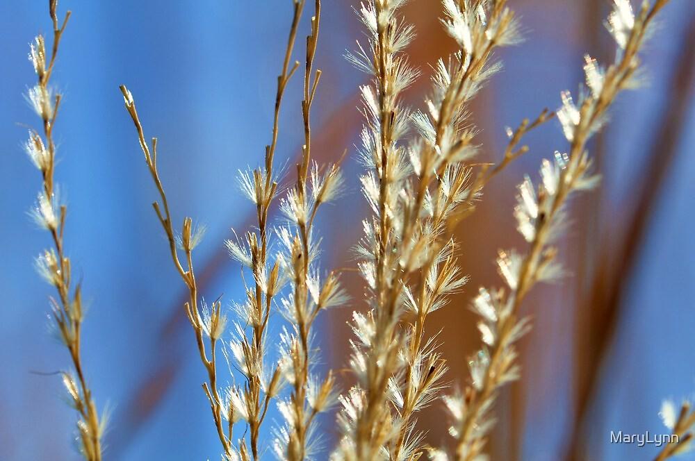 Pretty Grasses by MaryLynn