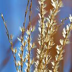 Pretty Grasses by MaryLynn