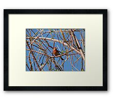 House Finch ~ Male Framed Print