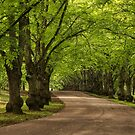 Parkway by Irina777