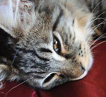 Playful Kitty by OakRanger