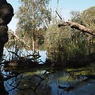 Return - Swamp at Young Rd, Torrumbarry by Dave Callaway