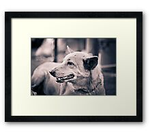 Dogs. Framed Print