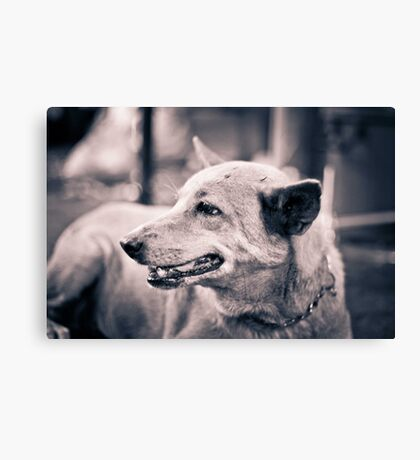 Dogs. Canvas Print