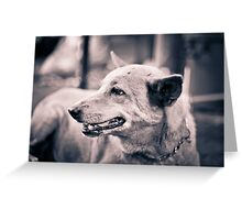 Dogs. Greeting Card