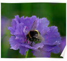 Bee Heaven Poster