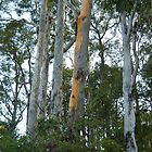 Tall Gums by dogwalker