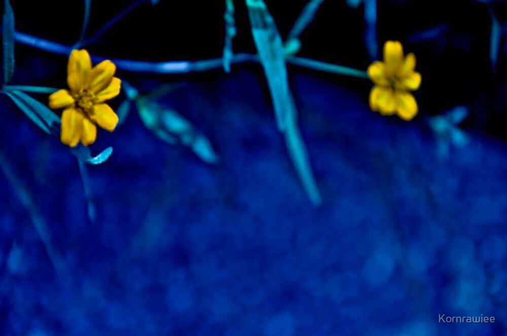 The blue lawn by Kornrawiee