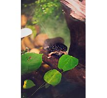 Turtle Saying Hello Photographic Print