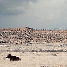 Desert Plains... by charlena