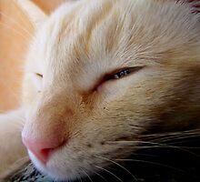 Mr. L Snoozing in the SunShine by BingoStar