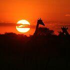 Sunset Necks by Donald  Mavor