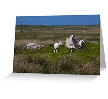 Ewe with lambs Outer Hebrides Scotland UK Greeting Card
