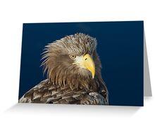 White Tailed Sea Eagle Greeting Card