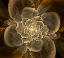 Old White Rose Petals by plunder
