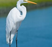 Great White Egret In Formal Ware by Joe Jennelle