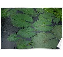 Tropical Raindrops & Water Lilly Pads  Poster