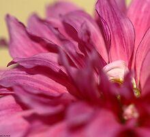 Florance  by HamimCHOWDHURY