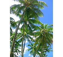 Palm trees in Puerto Rico Photographic Print