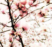 Sugar Magnolia by Jessica Jenney