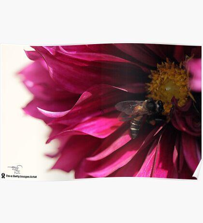Floral Dhaliya Poster
