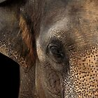 Asian Elephant Close-up by Mark Hughes