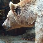 Brown Bear by jainiemac