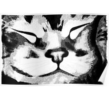 Sleeping Kitty ©  Poster